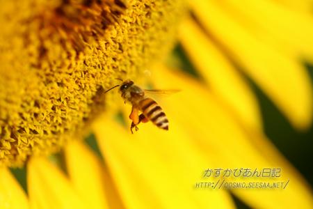 IMG_5745hachi.jpg