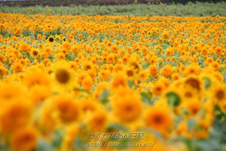 IMG_6237zen.jpg